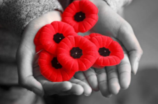 Remembrance Day Photo #2